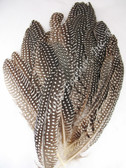 GUINEA FEATHERS, Wing Quills, Natural