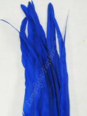 COQUE FEATHERS, 15-18 inch, BLUE, per DOZEN