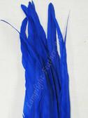 Coque, 15-18 inch, BLUE, per DOZEN