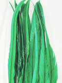 COQUE FEATHERS, 15-18 inch, GREEN, per DOZEN