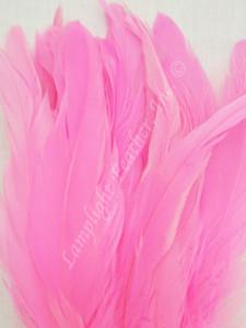 COQUE, 9-12 inch, Hot Pink, per 12