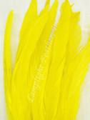 COQUE FEATHERS, 9-12 inch, YELLOW, per DOZEN
