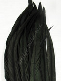 COQUE FEATHERS, 15-18 inch, BLACK, per DOZEN