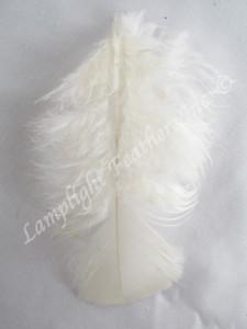 Turkey Plumage Craft Feathers, Ivory, per 1 oz bag