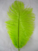 LIME OSTRICH FEATHERS, STANDARD, 12-16 inch, per EACH