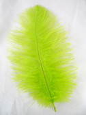 OSTRICH Feathers, MINI, lime,