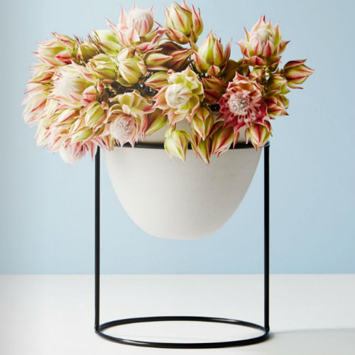 Ivy Muse - Nest Range Black Stand with Feather Grey Pot