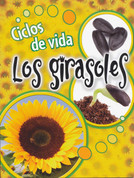 Ciclos de vida: Los girasoles - Life Cycles: Sunflowers