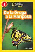De oruga a mariposa - Caterpillar to Butterfly