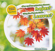 ¿Por qué las plantas tienen hojas?/Why Do Plants Have Leaves?