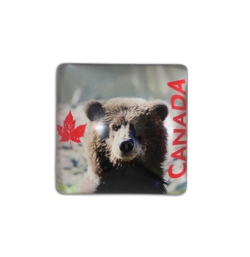 Square bear magnet with Canadian maple leaf on the left and CANADA written on the right.