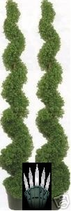 Artificial Boxwood Spiral Topiary Trees Potted 6 foot 3 inch Tall Two with Christmas Lights