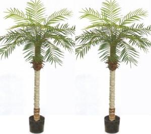 2 ARTIFICIAL 5u0027 PHOENIX PALM TREE PLANT SILK BUSH POOL PATIO DECK  ARRANGEMENT POTTED
