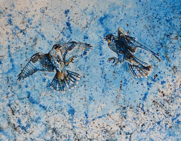 Peregine Falcons