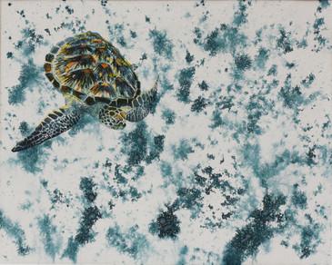 Sea Turtle in Aqua