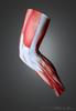 Muscle Leg warmers