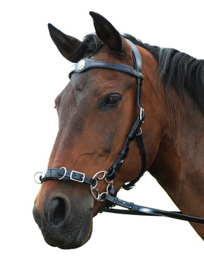 """""""Caval"""" Bitless Hackamore doubles as a training Cavesson"""