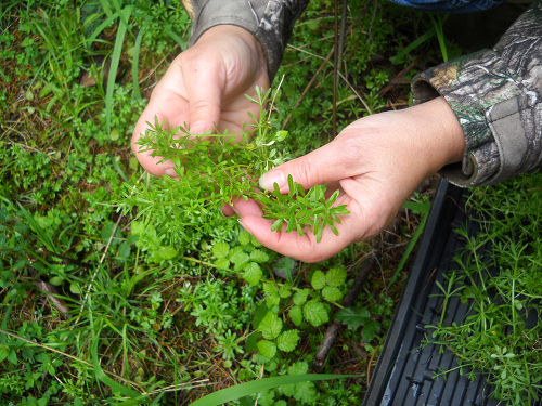 Picking Cleavers