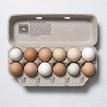 Farm Fresh Eggs, laid by pasture raised hens.