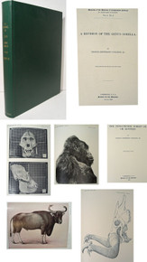 Rare Zoology Book: Coolidge, Harold J.; A Revision of the Genus Gorilla and Forest Ox