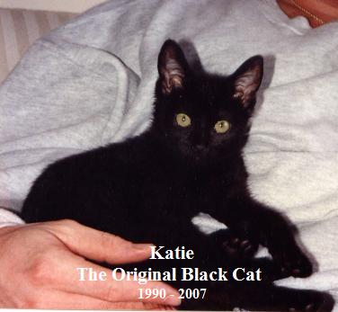 black-cat-katie.jpg