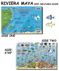 Waterproof Fish ID Card - Mayan Riviera Mexico