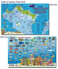 Waterproof Fish ID Card - Turks & Caicos