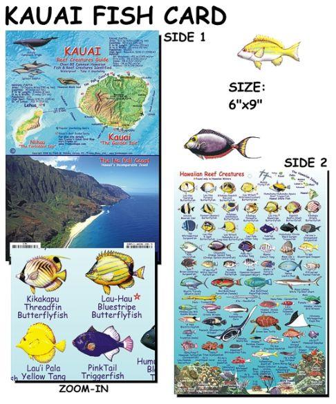 Kauai fish card scuba gear canada for Hawaiian fish identification