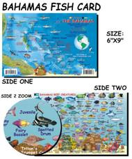 Waterproof Fish ID Card - Bahamas