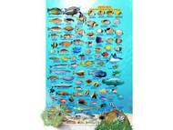 Waterproof Fish ID Card - Costa Rica Pacific