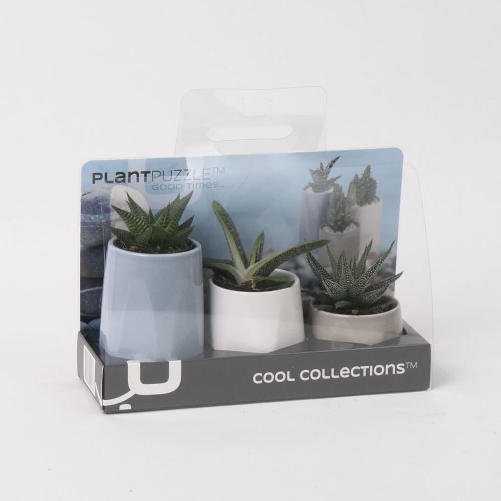 Ceramic Good Times Succulents