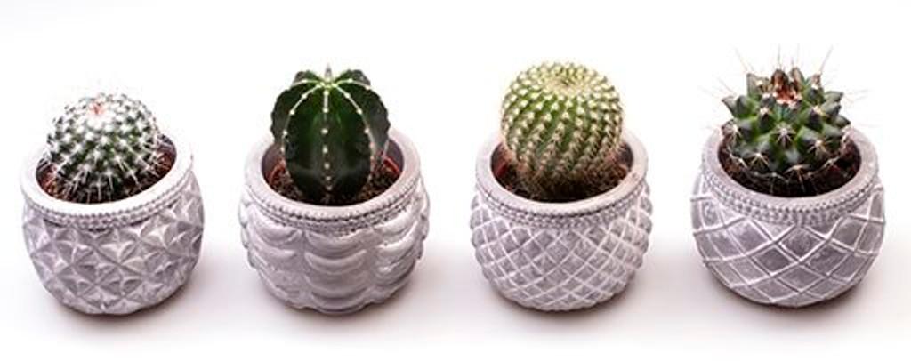 Concrete Cactus