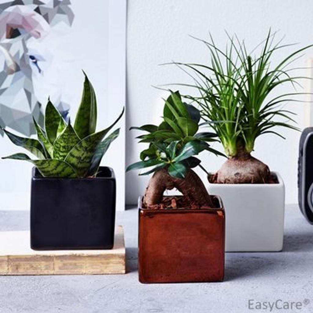 Cube mix succulents