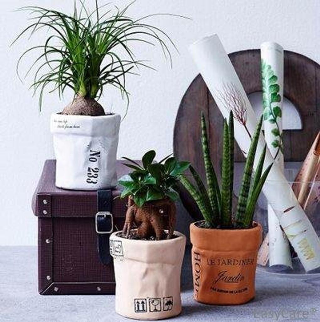 ceramic succulent bag
