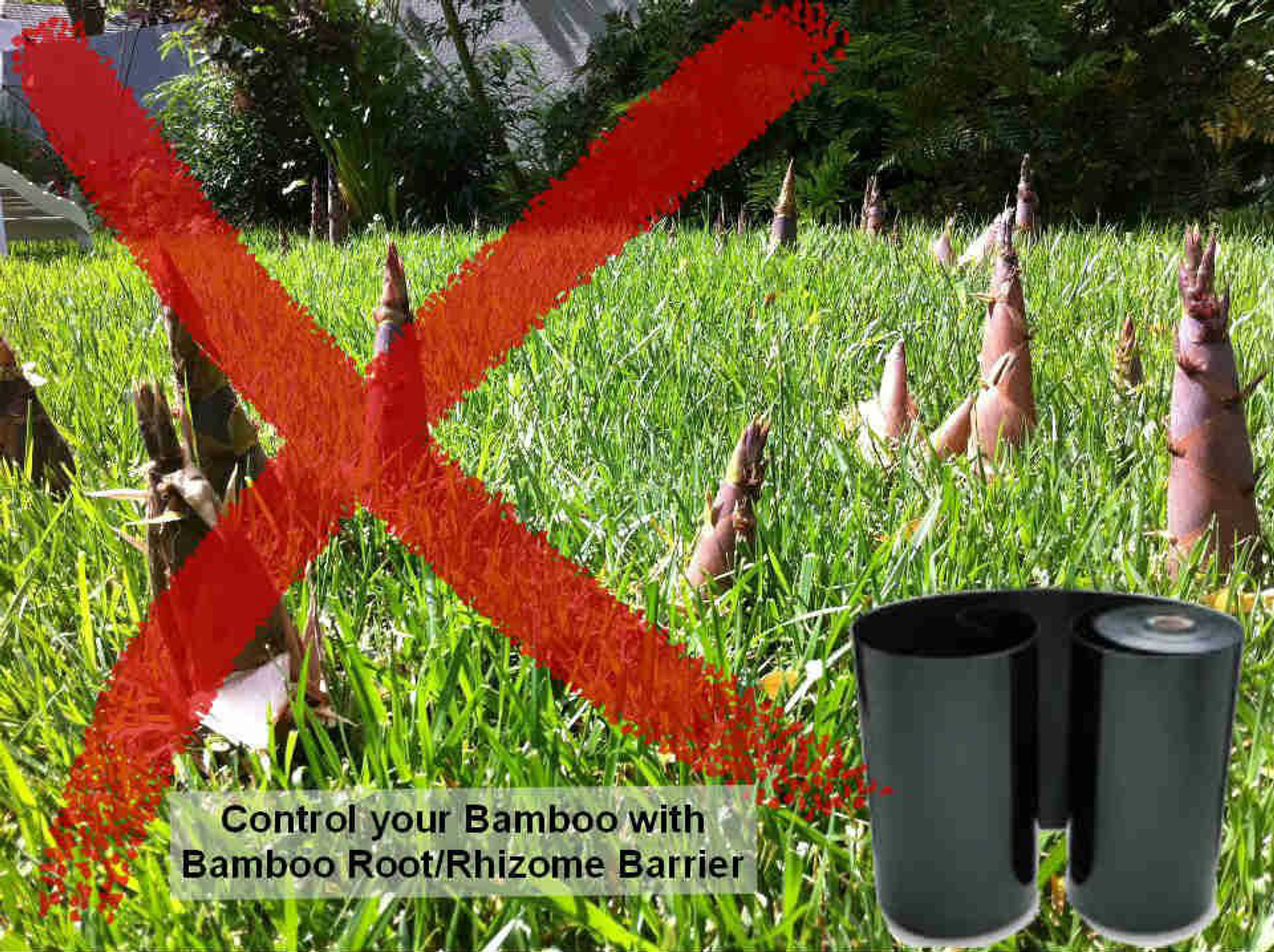 stop bamboo plants spreading