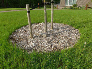 Tree plastic no dig edging to hold gravel