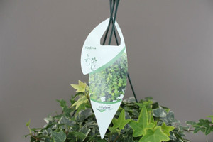 Potted hanging basket