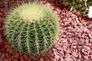 Inspiration of mother in law cactus