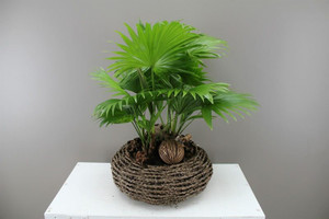Footstool Palm and basket