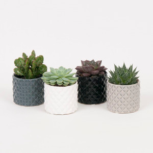 Jewellery patterned Succulents