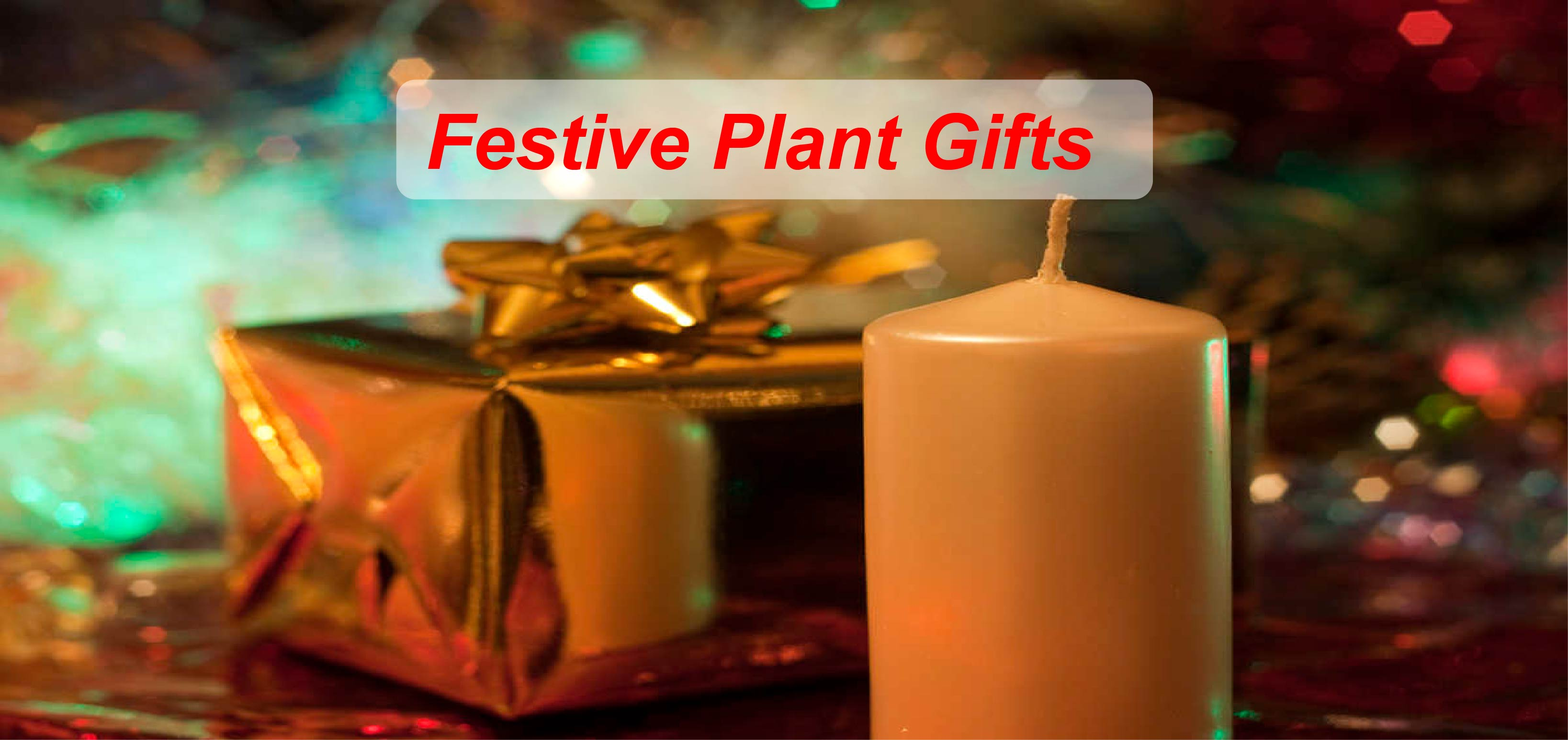 Christmas Plant and flower gifts
