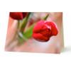 """""""Tulip"""" Card"""