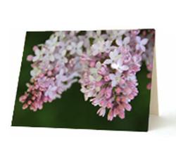 """""""Lilacs"""" Card"""
