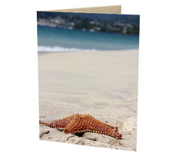 """Grenadian Starfish"" Card"