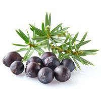Juniper Berry, (Juniperus communis)