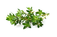 Thyme  (Thymus vulgaris ct. linalool) - Anti-Inflammatory ~ Calming ~ Immune Supporting