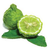 Bergamot (Citrus bergamia)