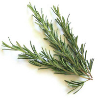 Rosemary (Rosmarinus officinalis ct. cineole) - Mental & Physical Stimulant ~ Respiratory Issues