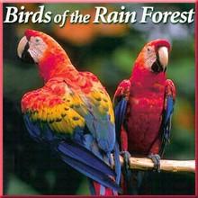 Birds of the Rain Forest CD