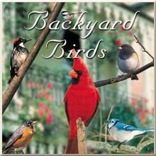 Backyard Birds CD